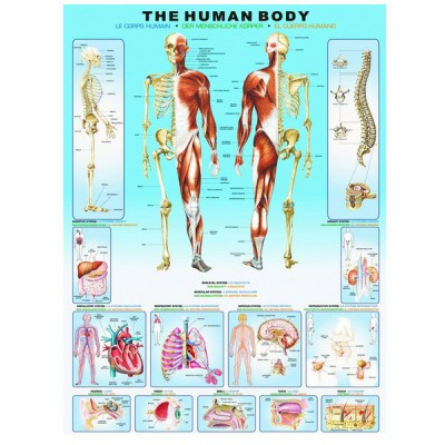 Puzzle Human body Eurographics-6000-1000 1000 pieces Jigsaw Puzzles ...
