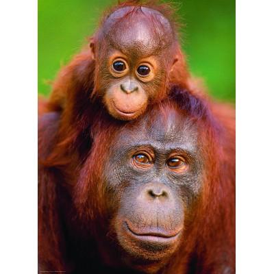 Puzzle Pieces of Nature Orangutan Baby
