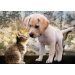 Kitten and Puppy 500 piece jigsaw puzzle