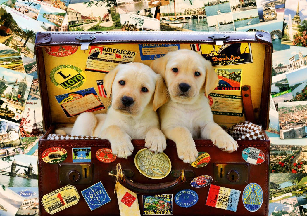 Two Travel Puppies 1000 piece jigsaw puzzle