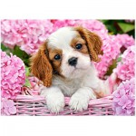 Puzzle  Castorland-018185 Pup in Punk Flowers