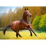 Puzzle  Castorland-018314 Horse