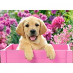 Puzzle  Castorland-030071 Labrador Puppy in Pink Box