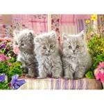 Puzzle  Castorland-030330 Three Grey Kittens
