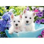 Puzzle  Castorland-066100 Westie Puppies