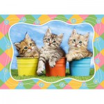 Puzzle  Castorland-06762 Siberian Kittens in Flowerpots
