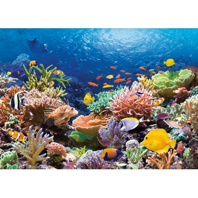 Castorland-101511 Jigsaw Puzzle - 1000 Pieces - Coral Reef