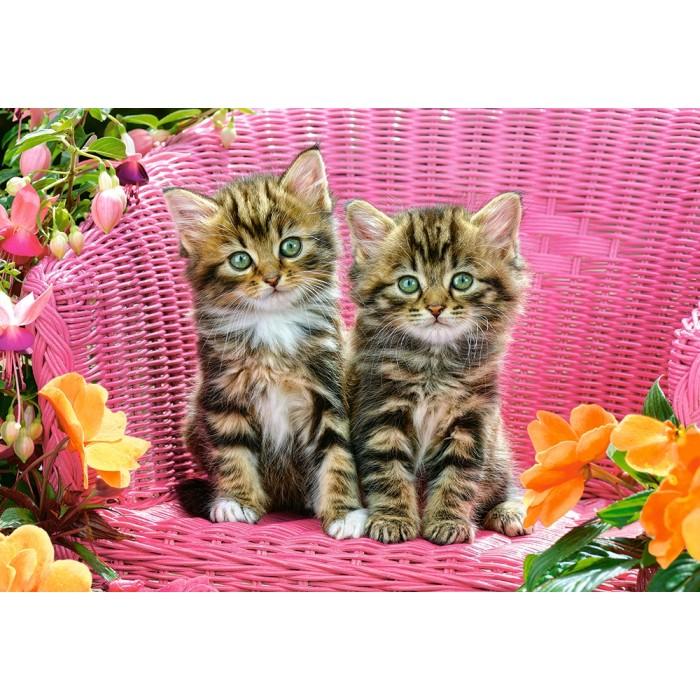 Kittens on Garden Chair