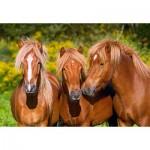 Puzzle  Castorland-103959 Horse Friends