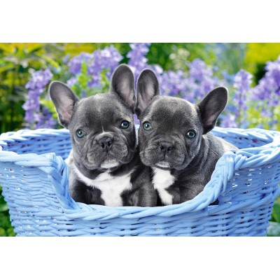 Puzzle Castorland-104246 French Bulldog Puppies