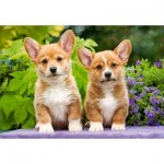 Puzzle  Castorland-104659 Welsh Corgi Puppies