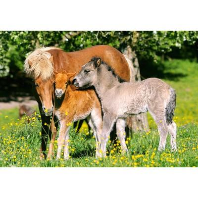 Puzzle Castorland-12909 Ponies in grassland