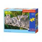 Puzzle  Castorland-13289 Koalas