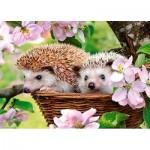 Puzzle  Castorland-13319 Springtime