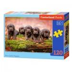 Puzzle  Castorland-13418 Puppies