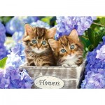 Puzzle  Castorland-151561 Cute Kittens