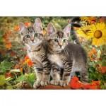 Puzzle  Castorland-151899 Kitten Buddies