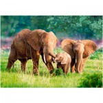 Puzzle  Castorland-52196 Elephant Family