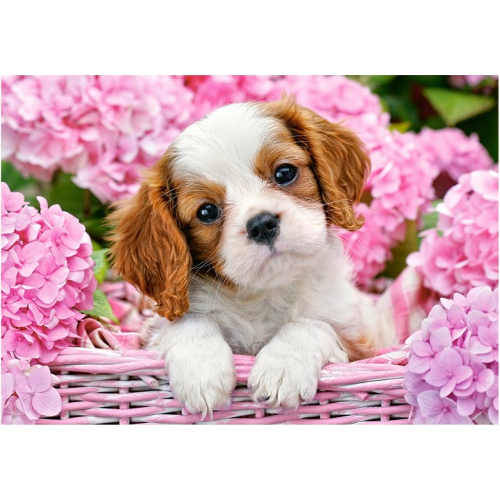 Pup in Pink Flowers