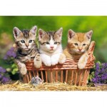 Puzzle  Castorland-52561 Three Lovely Kittens
