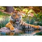 Puzzle  Castorland-52745 Sumatran Tiger
