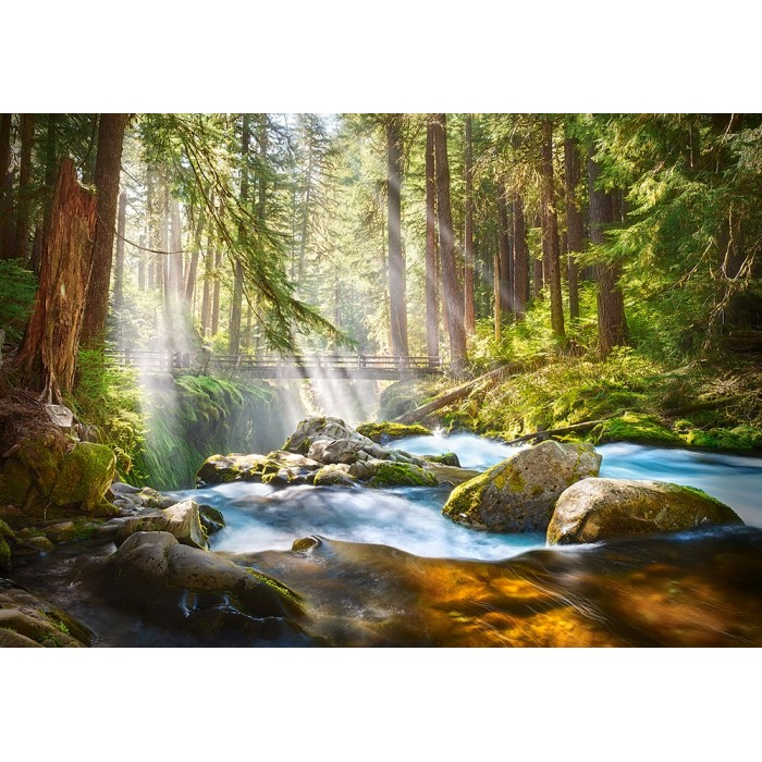 Forest Stream of Light