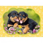 Puzzle  Castorland-B-035205 Mini Pieces - Little Rottweilers
