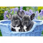 Puzzle   French Bulldog Puppies