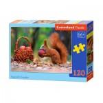 Puzzle   Squirrel's Supplies