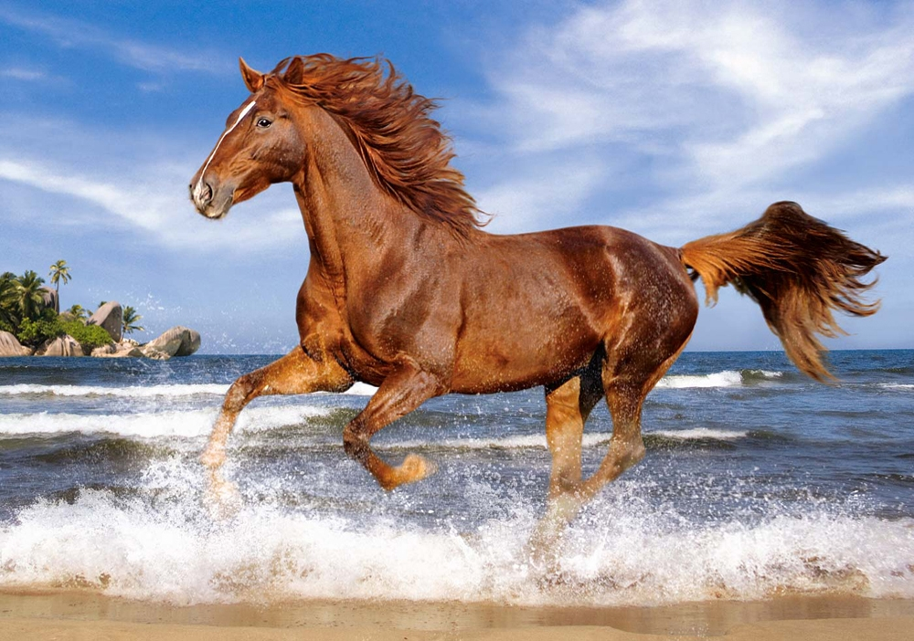 Puzzle Horse on the Beach Castorland-52578 500 pieces ...