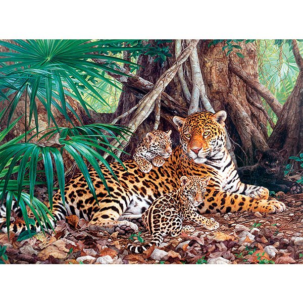 jigsaw puzzle 3000 pieces jaguars in the forest castorland 300280 3000 pieces jigsaw puzzles. Black Bedroom Furniture Sets. Home Design Ideas