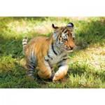 Puzzle  Clementoni-27998 WWF - Tiger