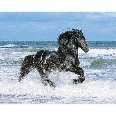 Clementoni-30175 Jigsaw Puzzle - 500 Pieces - Black Horse