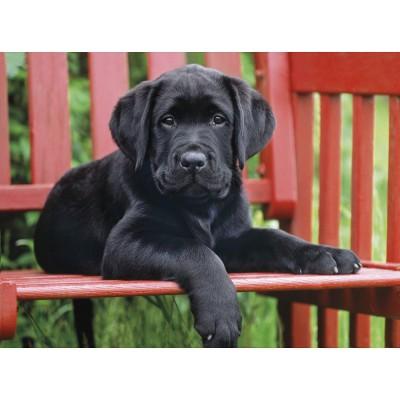 Clementoni-30346 Jigsaw Puzzle - 500 Pieces : Black Puppy