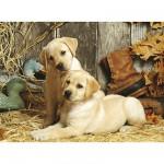 Clementoni-31976 Jigsaw Puzzle - 1500 Pieces - Curious Puppies