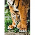 Puzzle  Clementoni-35046 Bengal Tiger Baby