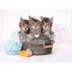 Puzzle  Clementoni-35065 Kittens