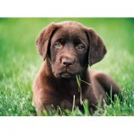 Puzzle  Clementoni-35072 Chocolate Puppy
