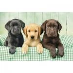Puzzle  Clementoni-39279 Labradors