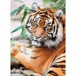 Puzzle  Clementoni-39295 Sumatran Tiger