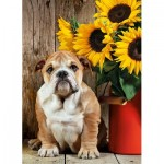Puzzle  Clementoni-39365 Bulldog