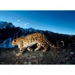 Puzzle  Clementoni-39376 National Geographic - Snow Leopard