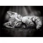 Puzzle  Clementoni-39422 Kitten
