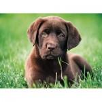 Puzzle   Chocolate Puppy