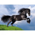 Puzzle   Fresian Black Horse