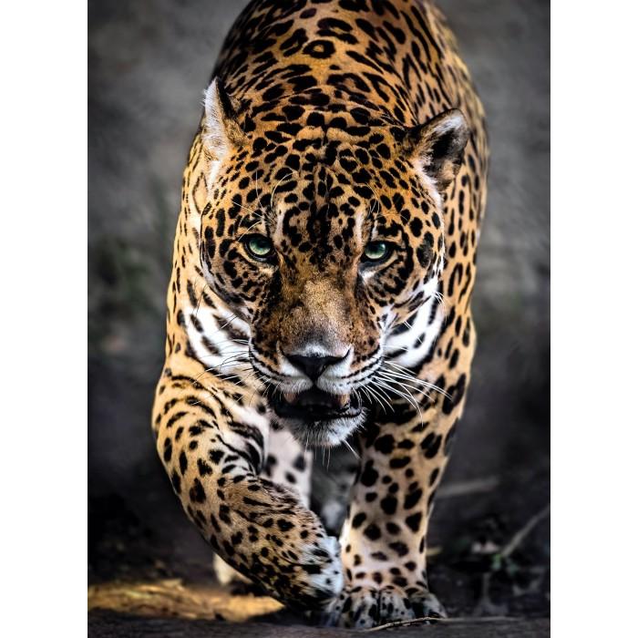 Jaguar Puzzle 1000 pieces
