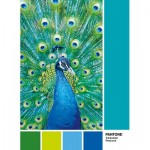 Puzzle   Pantone - Peacock Blue