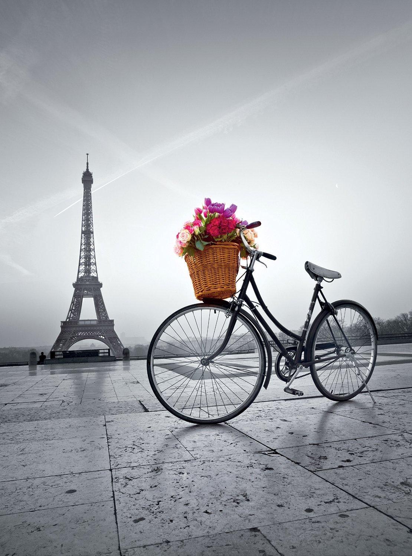 Картинки котенок на велосипеде примеру