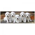 Puzzle  Dino-39324 Puppies