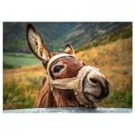 Puzzle  Dino-50248 Donkey
